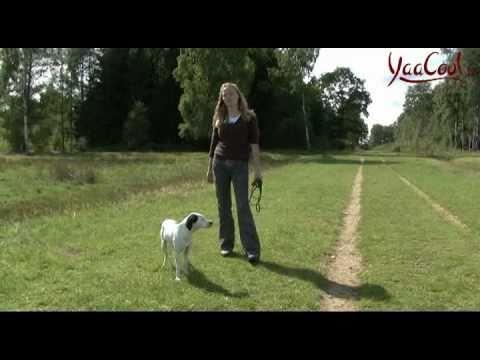 Hunde-Erziehung: Tipps & Tricks von einer Hundetrainerin zum Thema Hund